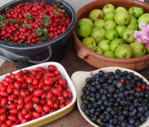 Various Foraged Fruits